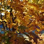 Höstlöv 2012-10-06