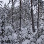 Grå vinterdag i kråksten