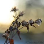 Blomma i motljus
