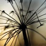 Växt i motljus